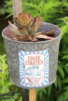 junk garden hen and chick starters, container gardening, crafts, gardening
