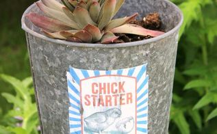 junk garden hen and chick starters, container gardening, crafts, gardening