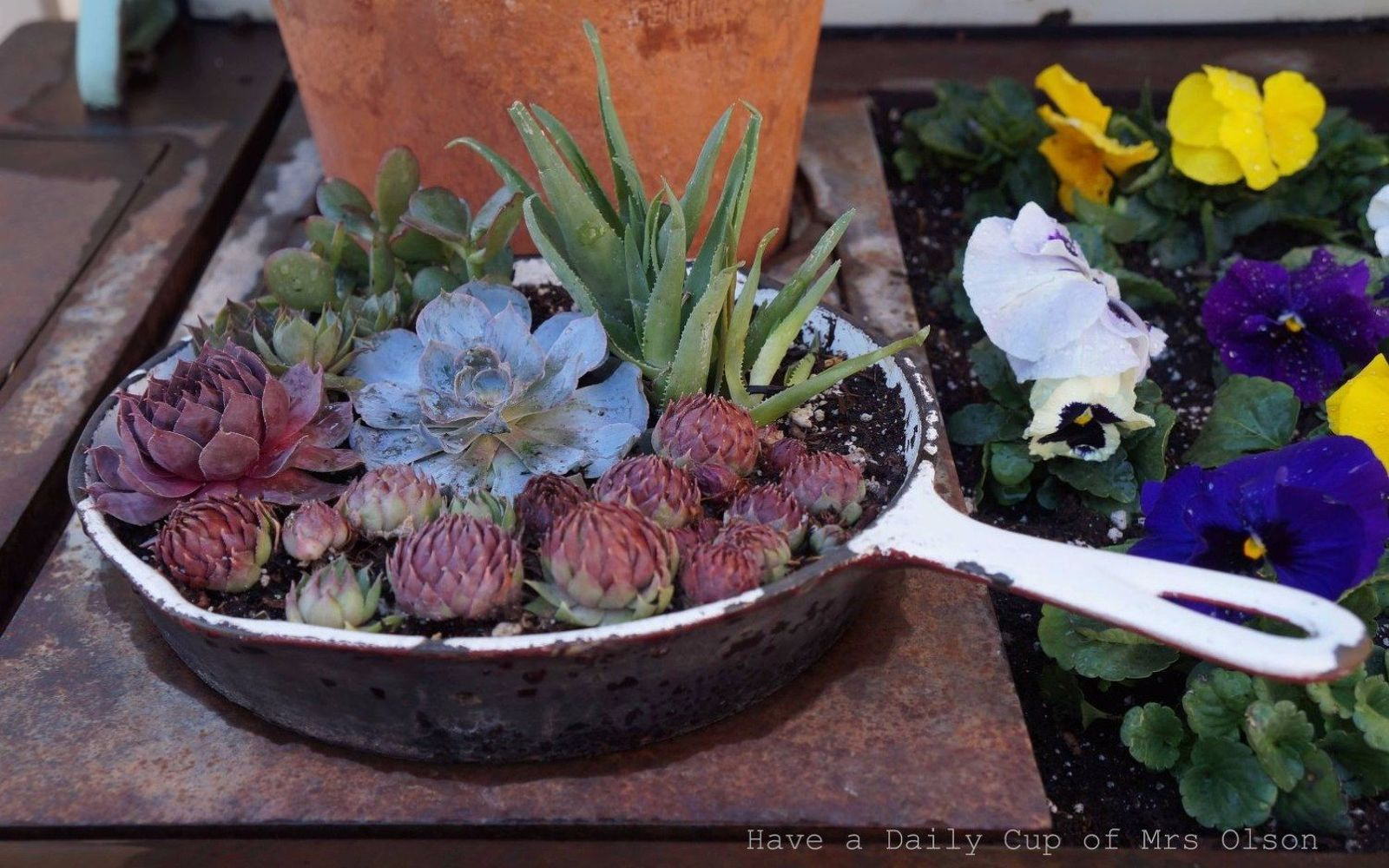 s 17 insanely fun ways to display your favorite succulents, flowers, gardening, succulents, Plant an entire garden in an old pan