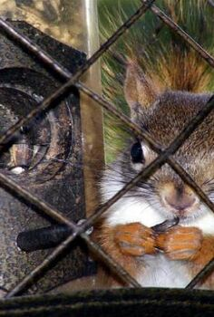 feeding birds by keeping squirrels away, gardening, gardening pests, pets, pets animals