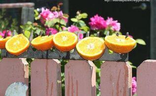 rake head bird or butterfly feeder , animals, gardening, how to, pets animals, repurposing upcycling