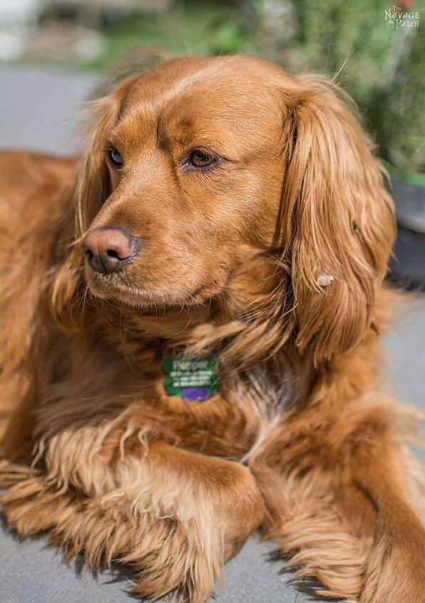 Papasan Dog Hut Hometalk