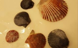 q vitalize shells, crafts, I wet 1 2 of each shell to show the vibrant colors