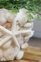 diy shell covered terra cotta pot, crafts