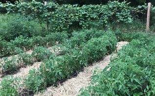 straw composting die weed seeds die , composting, gardening, go green