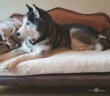 build a dog sofa, pets, pets animals, reupholster