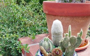 2 cactus dish garden makeovers, container gardening, gardening, how to