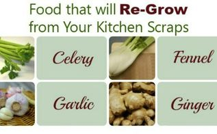 grow new food from kitchen scraps, gardening, how to, plant care