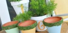 how to moss emboss ordinary clay pots for a fabulous new look, container gardening, crafts, gardening, how to