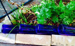 beer bottles in the garden, gardening, how to, landscape, repurposing upcycling