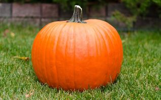 how to prepare your fresh pumpkins so they will last the fall season, halloween decorations, how to, seasonal holiday decor