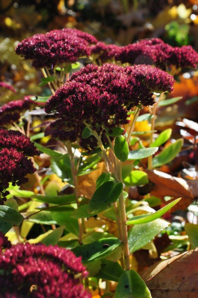 The top 15 fall flowers everyone is loving this season for Popular fall flowers