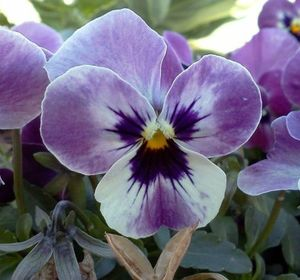s the top 15 fall flowers everyone is loving this season, gardening