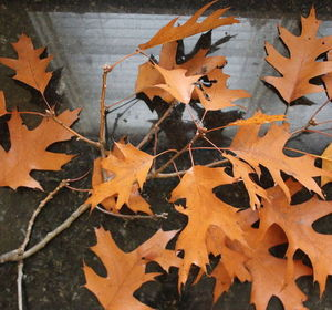 s why everyone is excited to rake leaves this fall, gardening