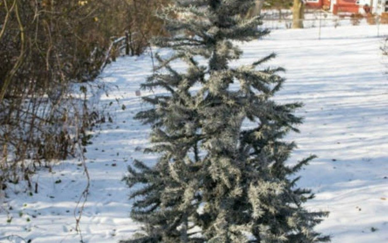 s don t stop at ornaments these tree decorating ideas are even better, christmas decorations, seasonal holiday decor, Spray paint your branches for a snowy look