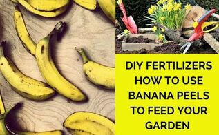 diy fertilisers how to feed your garden with banana peels, how to