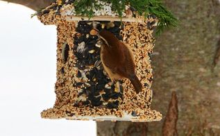 winter fun diy create bird seed cottage feeder, gardening
