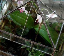 gardening under glass, gardening