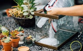 easy diy terrarium from an old fish tank, gardening, terrarium