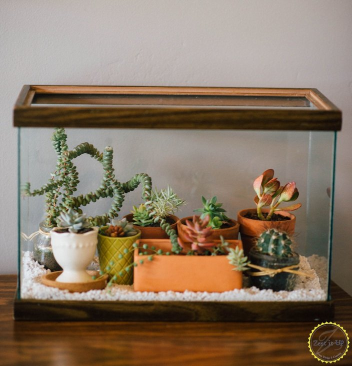 Easy DIY Terrarium From an Old Fish Tank | Hometalk