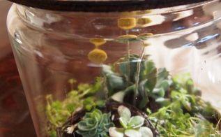 diy terrarium, gardening, terrarium