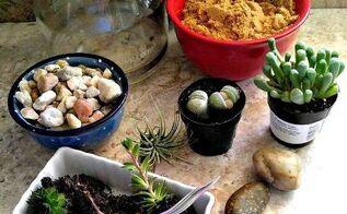 diy coffee pot terrarium, gardening, painted furniture, terrarium