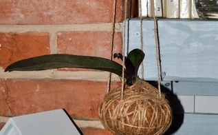 hanging orchid step by step, flowers