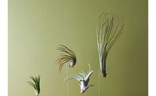 e air plant diy holders, gardening