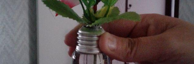 q light bulb flower, gardening