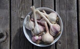 how to grow garlic in your garden, gardening, how to