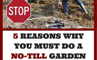 why you absolutely must do a no till garden