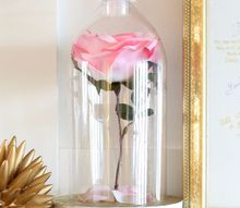 beauty and the beast rose cloche, flowers, gardening