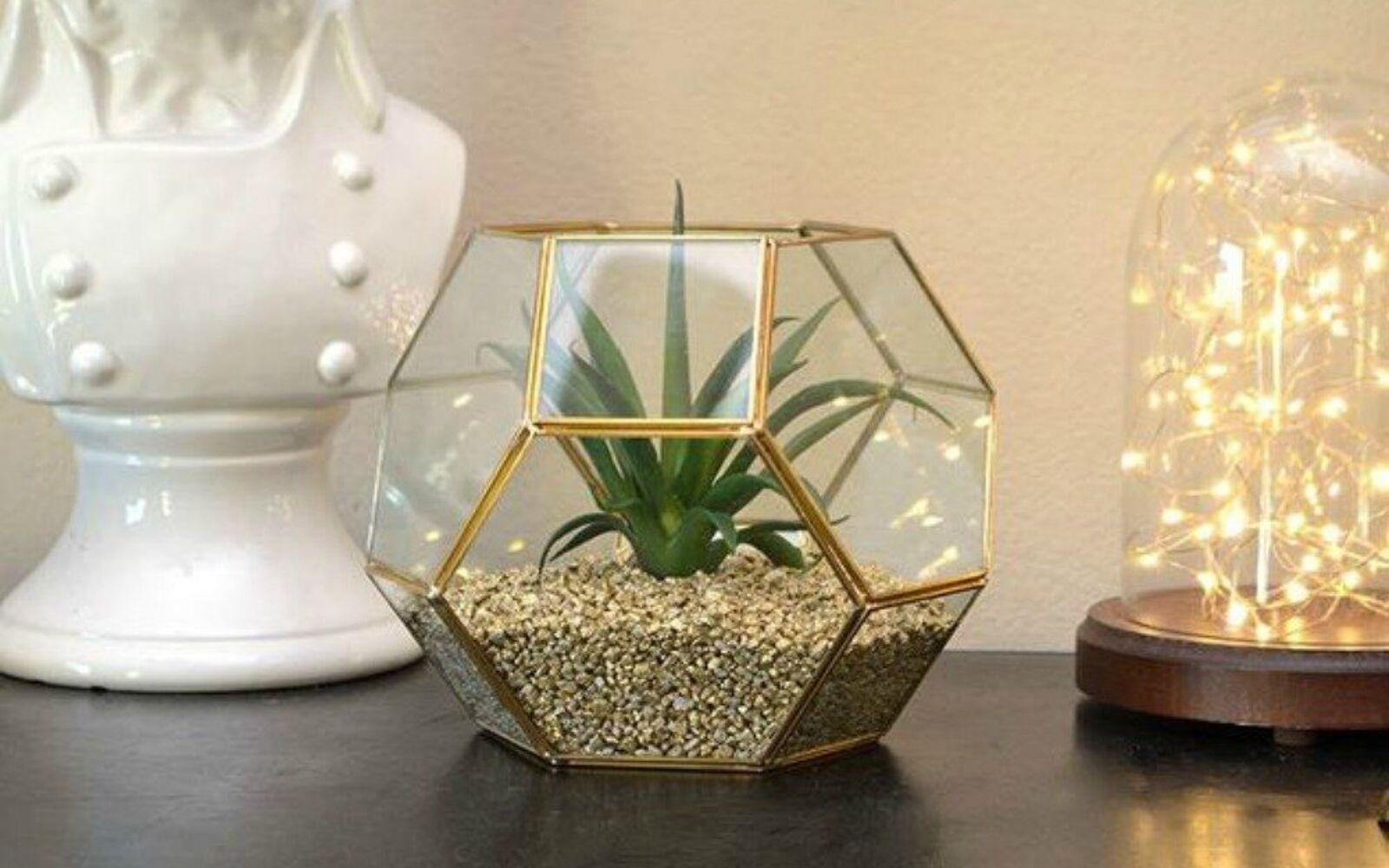 s 21 of the cutest terrariums we ve ever seen, gardening, terrarium, This hexagon shaped one