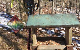 q hometalkers i need bird feeder and bird seed advice virginia area