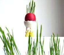 growing grass in eggshells simple easter diy