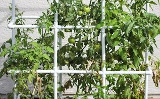 my new heavy duty tomato cage, animals, appliance repair, appliances, architecture, basement ideas, bathroom ideas, bedroom ideas, bug extermination, bug repellent, chalk paint, chalkboard paint, christmas decorations, cleaning tips, closet, composting, concrete masonry, concrete countertops, concrete creations, concrete repair, container gardening, cosmetic changes, countertops, craft rooms, crafts, curb appeal, decks, decoupage, dining room ideas, diy, doors, earthworms, easter decorations, electrical, entertainment rec rooms, exterior home painting, fabric cleaning, fences, fireplace cleaning, fireplace makeovers, fireplaces mantels, fixing windows, flooring, flowers, foyer, furniture cleaning, furniture id, furniture refurbishing, furniture repair, garage doors, garages, gardening, gardening pests, gardening tools, go green, halloween decorations, hardwood floors, hibiscus, home decor, home decor cleaning, home decor dilemma, home decor id, home improvement, home maintenance repairs, home office, home security, homesteading, house cleaning, how to, hvac, hydrangea, indoor pests, interior home painting, kitchen backsplash, kitchen cabinets, kitchen design, kitchen island, landscape, large home improvement projects, laundry rooms, lawn care, lighting, living room ideas, major home repair, mantels, mason jars, minor home repair, organizing, outdoor furniture, outdoor living, outdoors cleaning, paint colors, painted furniture, painted furniture finishes, painting, painting cabinets, painting concrete, painting over finishes, painting upholstered furniture, painting wood furniture, pallet, patio, patriotic decor ideas, perennial, pest control, pet stain cleaning, pets, pets animals, plant care, plant id, plumbing, ponds water features, pool designs, porches, products, raised garden beds, real estate, removing paint from furniture, repurpose building materials, repurpose furniture, repurpose household items, repurpose unique pieces, repurpose windows, repurposing upcycling, reupholstoring, roofing, rustic furniture, seasonal holiday decor, shabby chic, shelving ideas, small bathroom ideas, small home improvement projects, spas, stairs, storage ideas, succulents, terrarium, thanksgiving decorations, tile flooring, tiling, tools, reupholster, urban living, valentines day ideas, wall decor, window treatments, windows, woodworking projects, wreaths