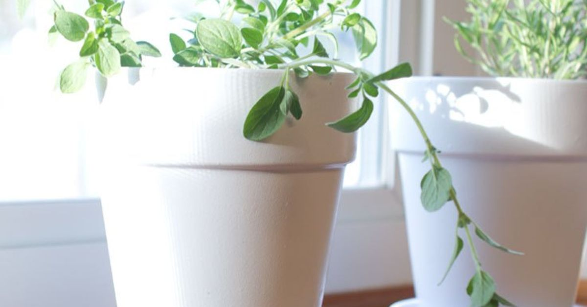 How To Grow Herbs Successfully Indoors Hometalk