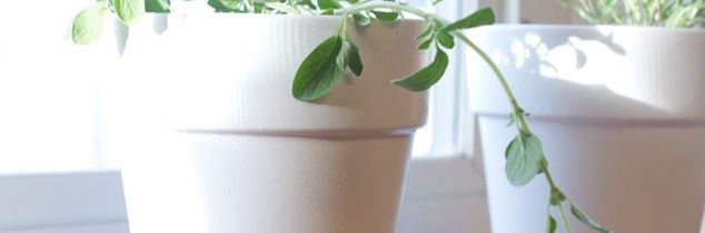 q how to grow herbs successfully indoors