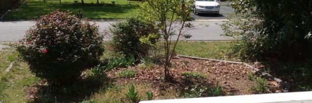 q my gardening disaster