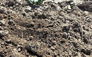 the secret to perfect easy to work with garden soil