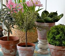 easily give new terra cotta pots an aged look