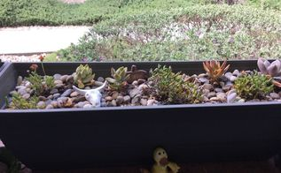 q planting succulent cactus flower boxes in north las vegas