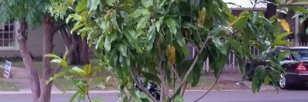 q what s the best feed for this tree it s been slow in growing