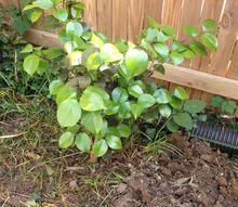 q identifying plant