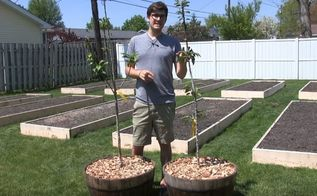 grow apples in containers take up just 1 square foot