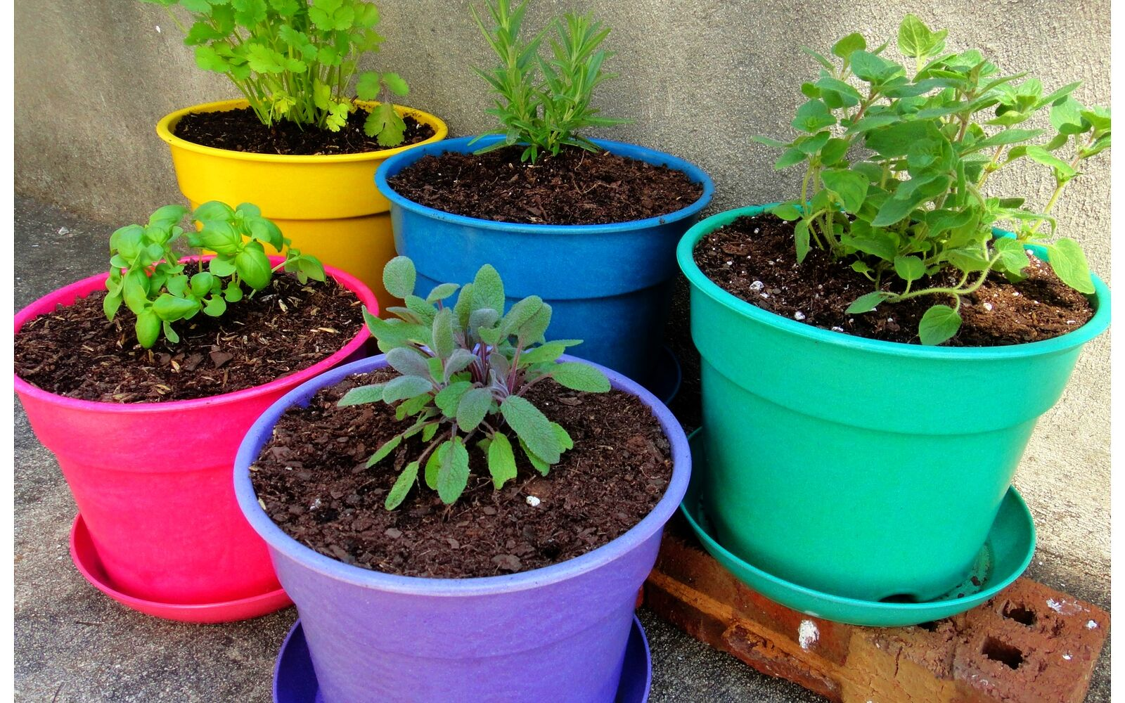 s the easiest ways to grow a bumper crop of tomatoes, Give your tomatoes some companions