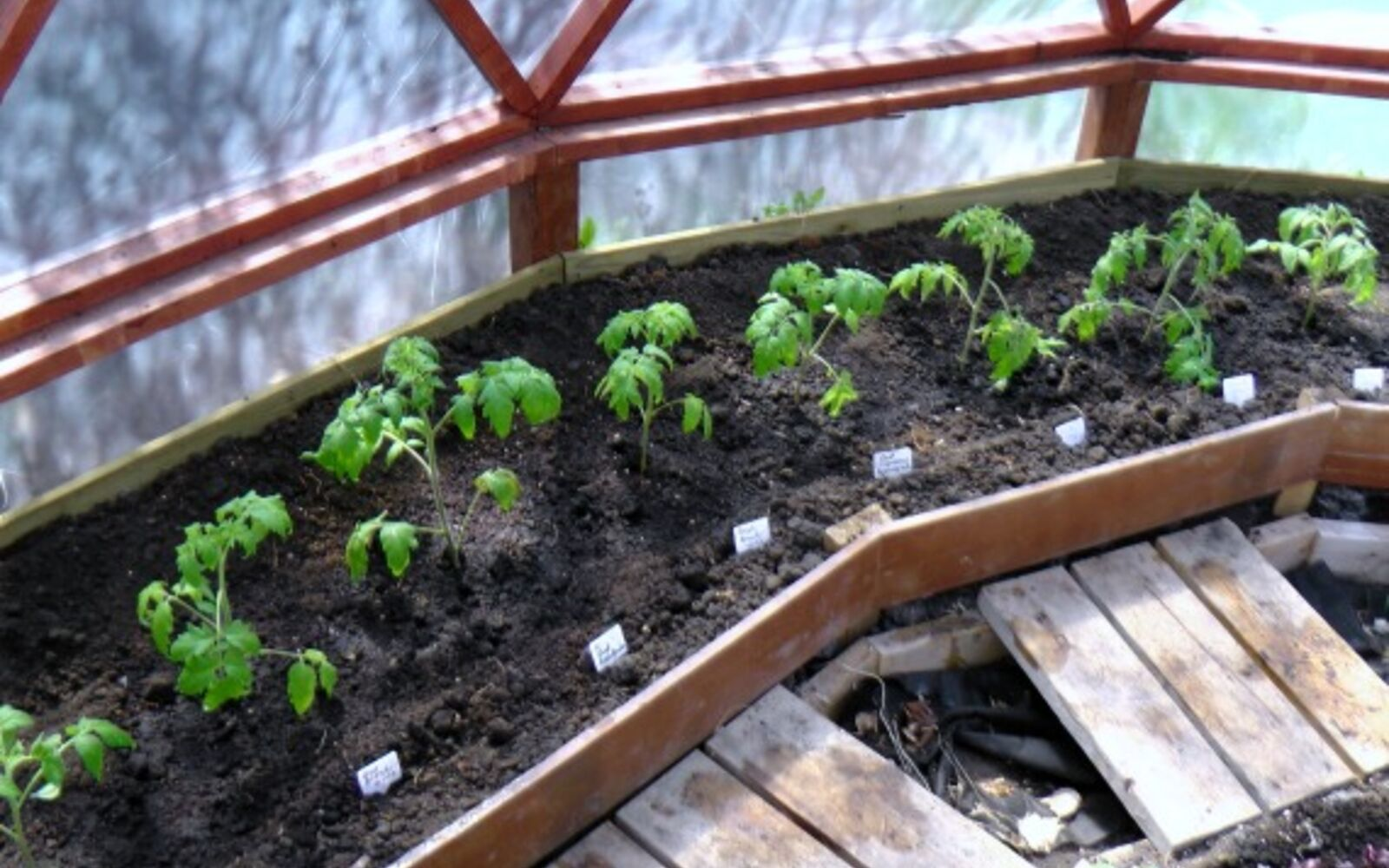 s the easiest ways to grow a bumper crop of tomatoes, Plant them in a greenhouse