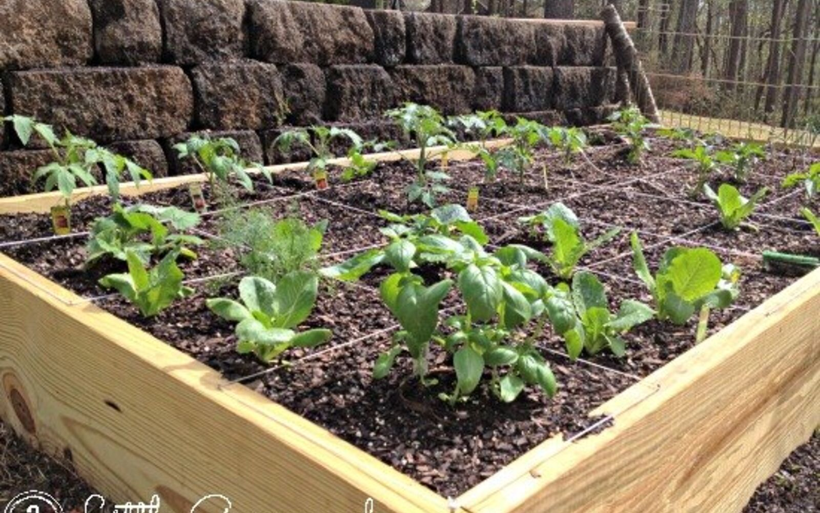s the easiest ways to grow a bumper crop of tomatoes, Build your own container