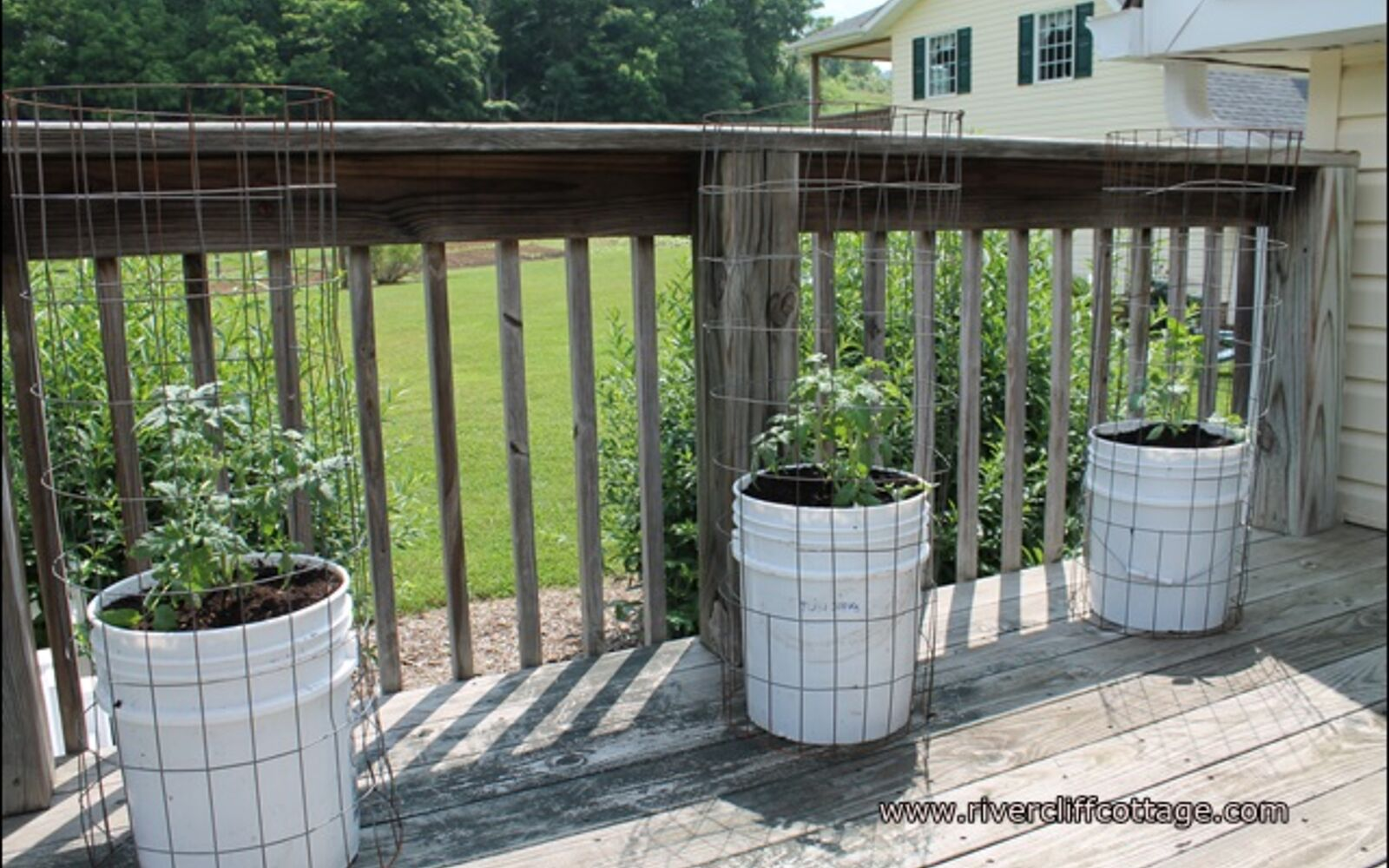 s the easiest ways to grow a bumper crop of tomatoes, Expand your garden by growing in buckets