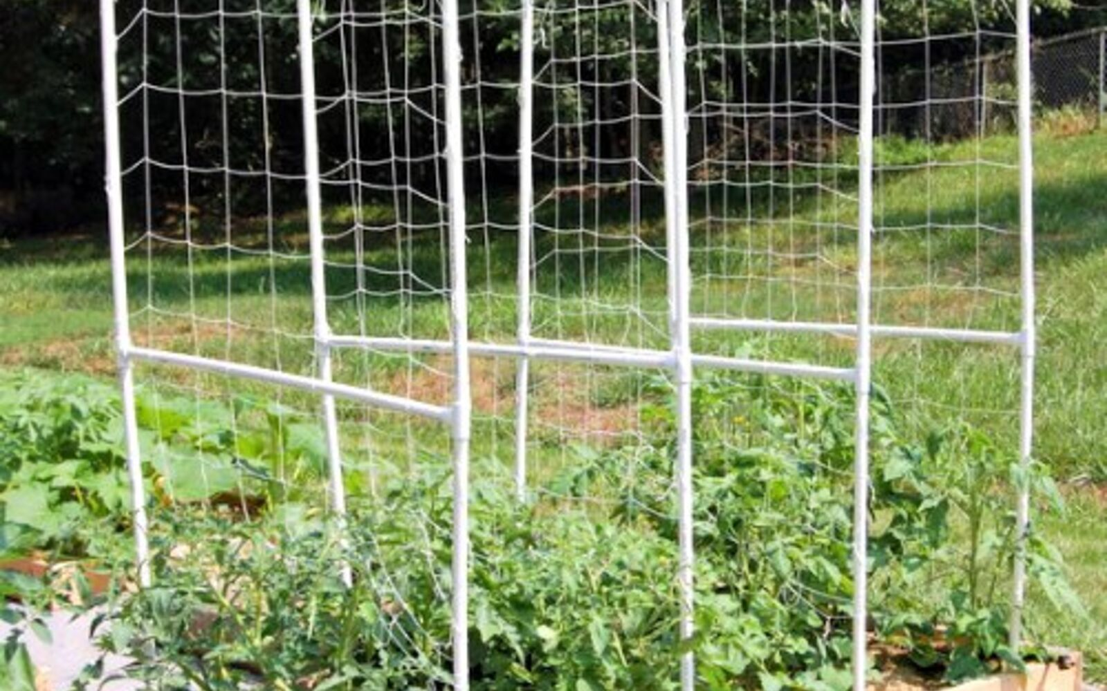 s the easiest ways to grow a bumper crop of tomatoes, Build a tomato trellis from PVC pipes